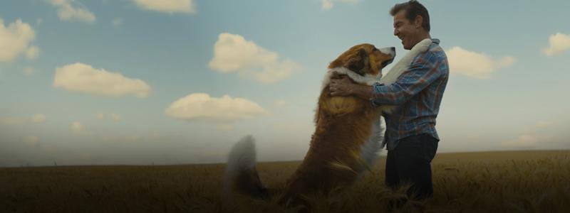 Обзор фильма «Собачья жизнь 2». Поплачем снова?
