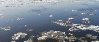 Строитель, спасший собаку из ледяной воды на Урале, подробно рассказал о случившемся